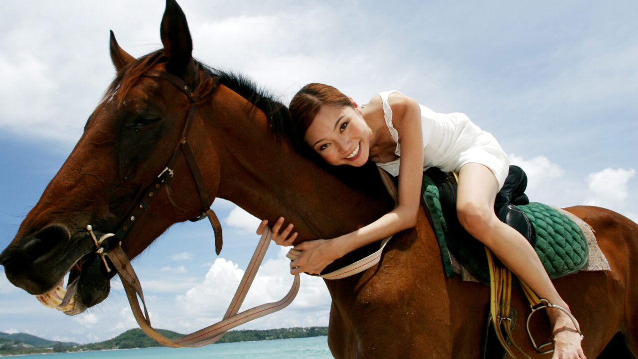 Professional Equine Massage Techniques You Can Use on Your Own Horse