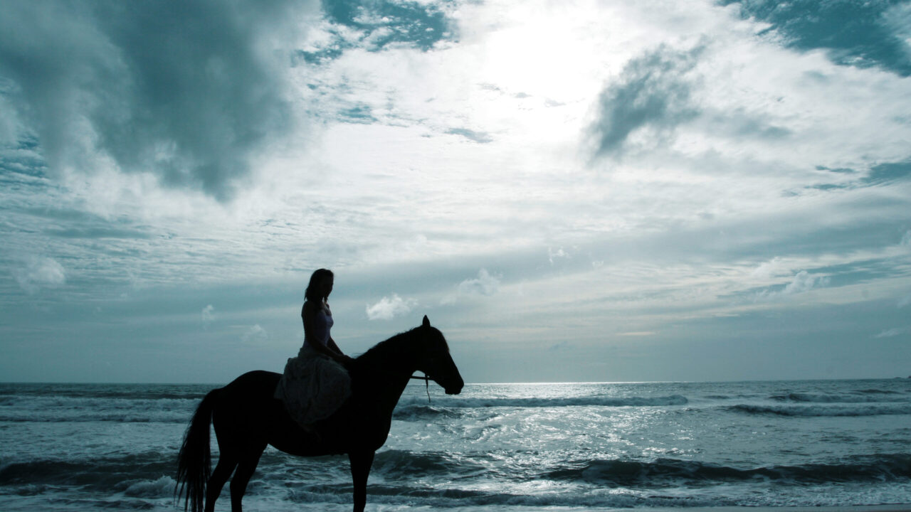 50 Amazing Quotes about  Horse Training and Horse Behavior