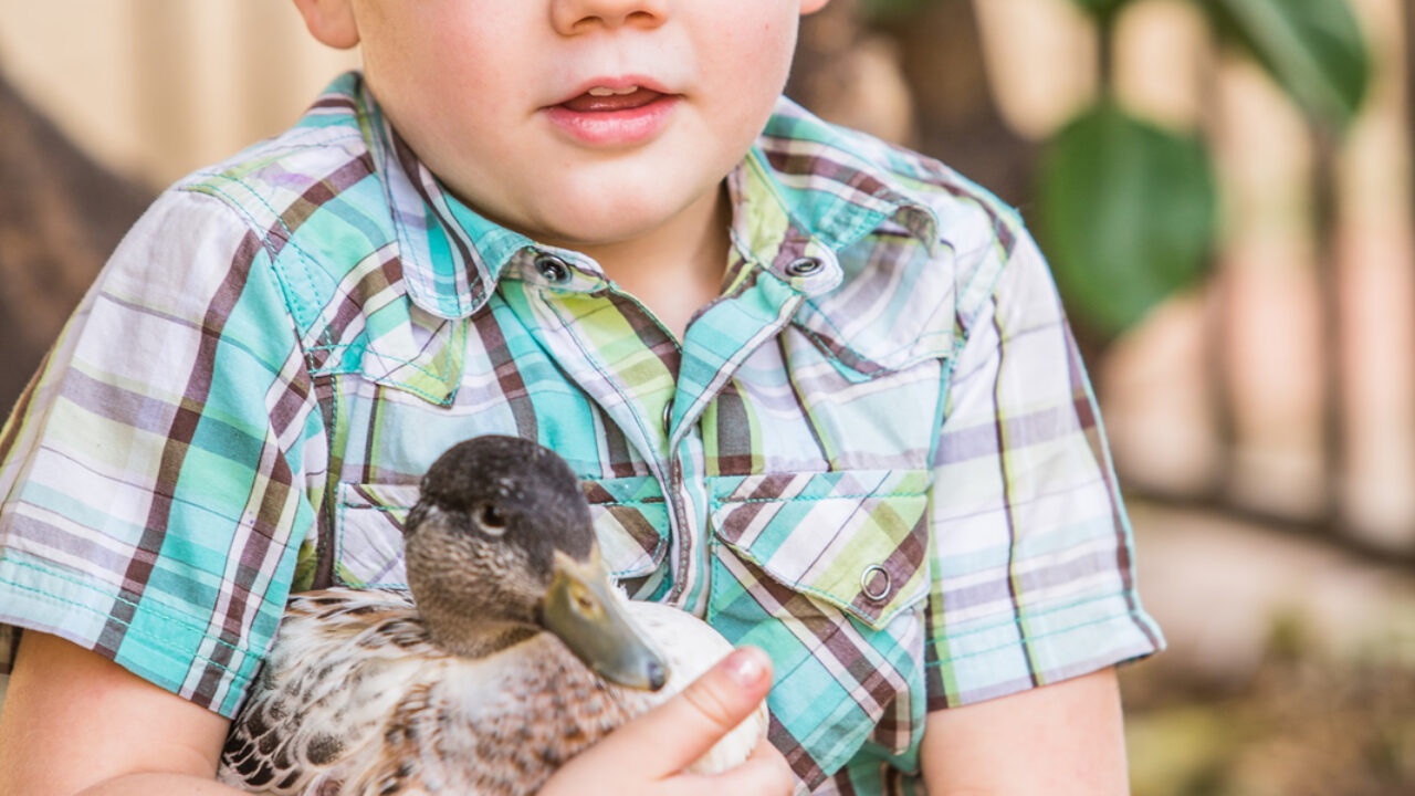 What Can You Feed Baby Ducks?