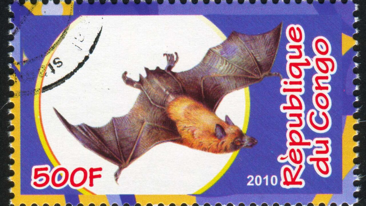 How and Why Are Bats Protected?