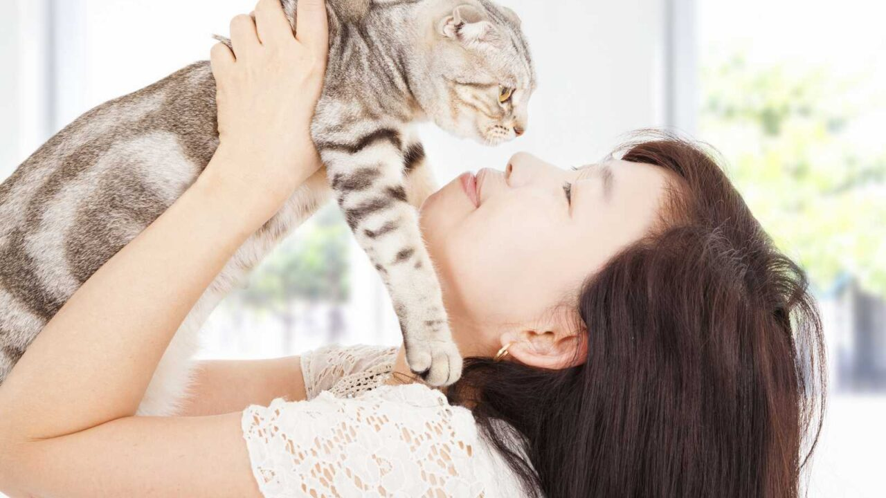 Do Cats Forget You?