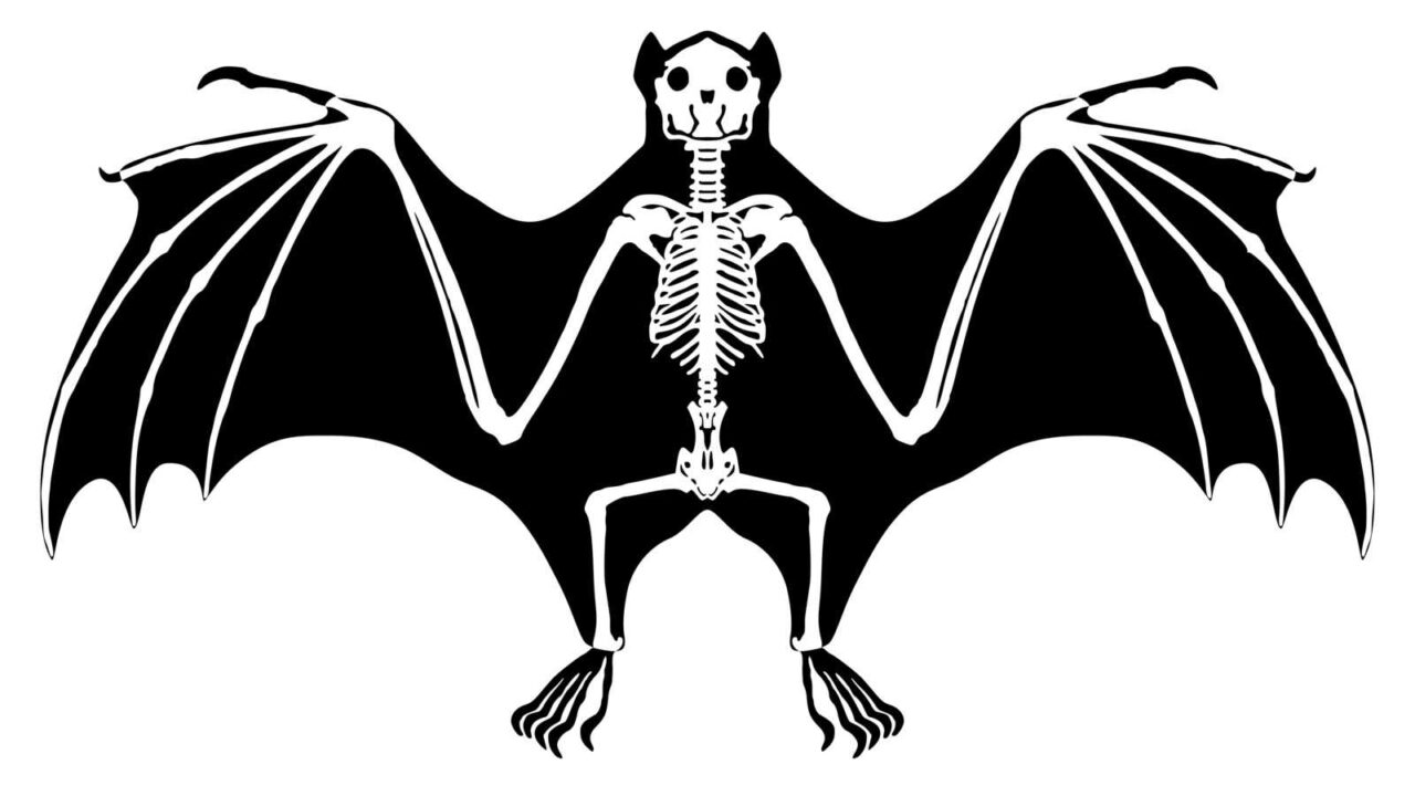 Does a Bat Have a Tail?