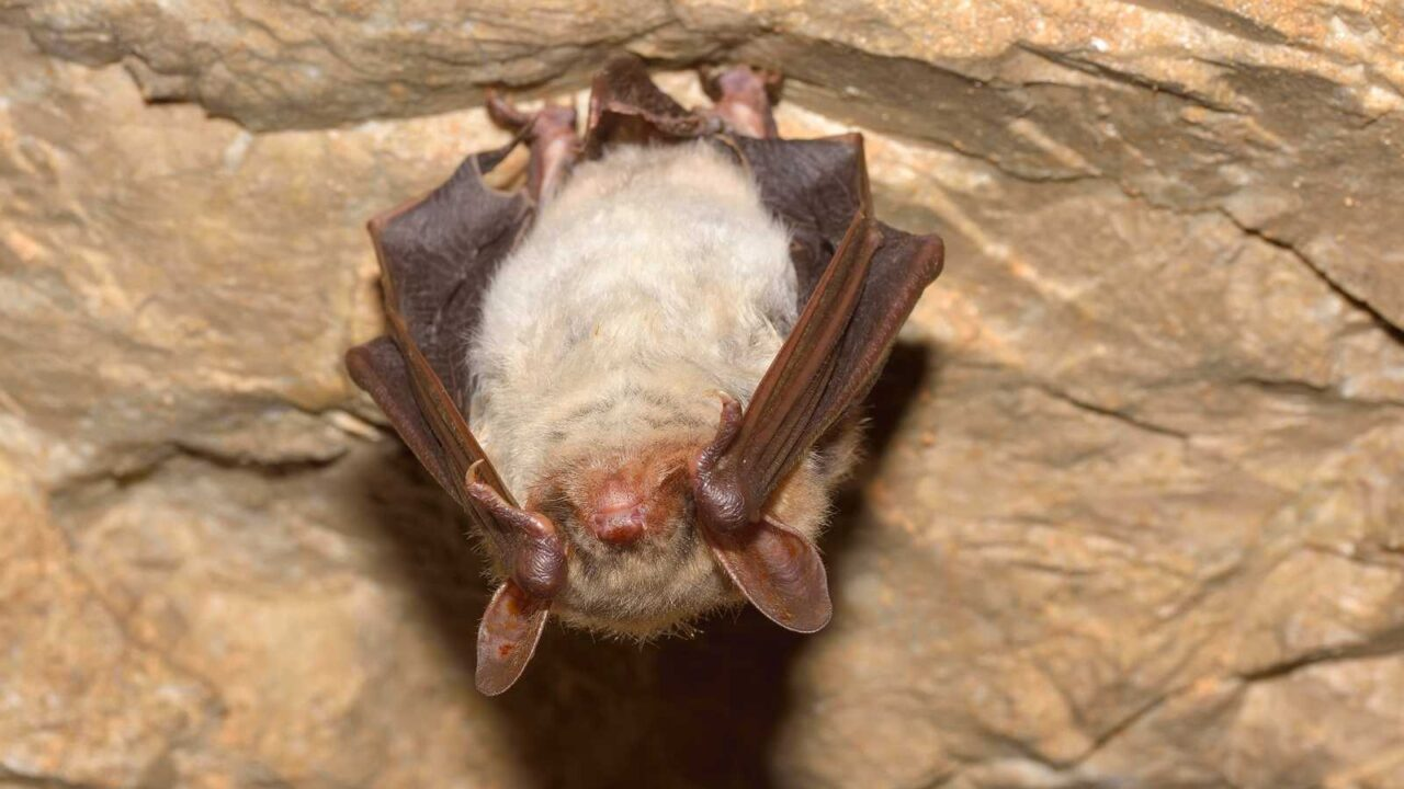 Do Bats Have Eyes? How Well Can They See?