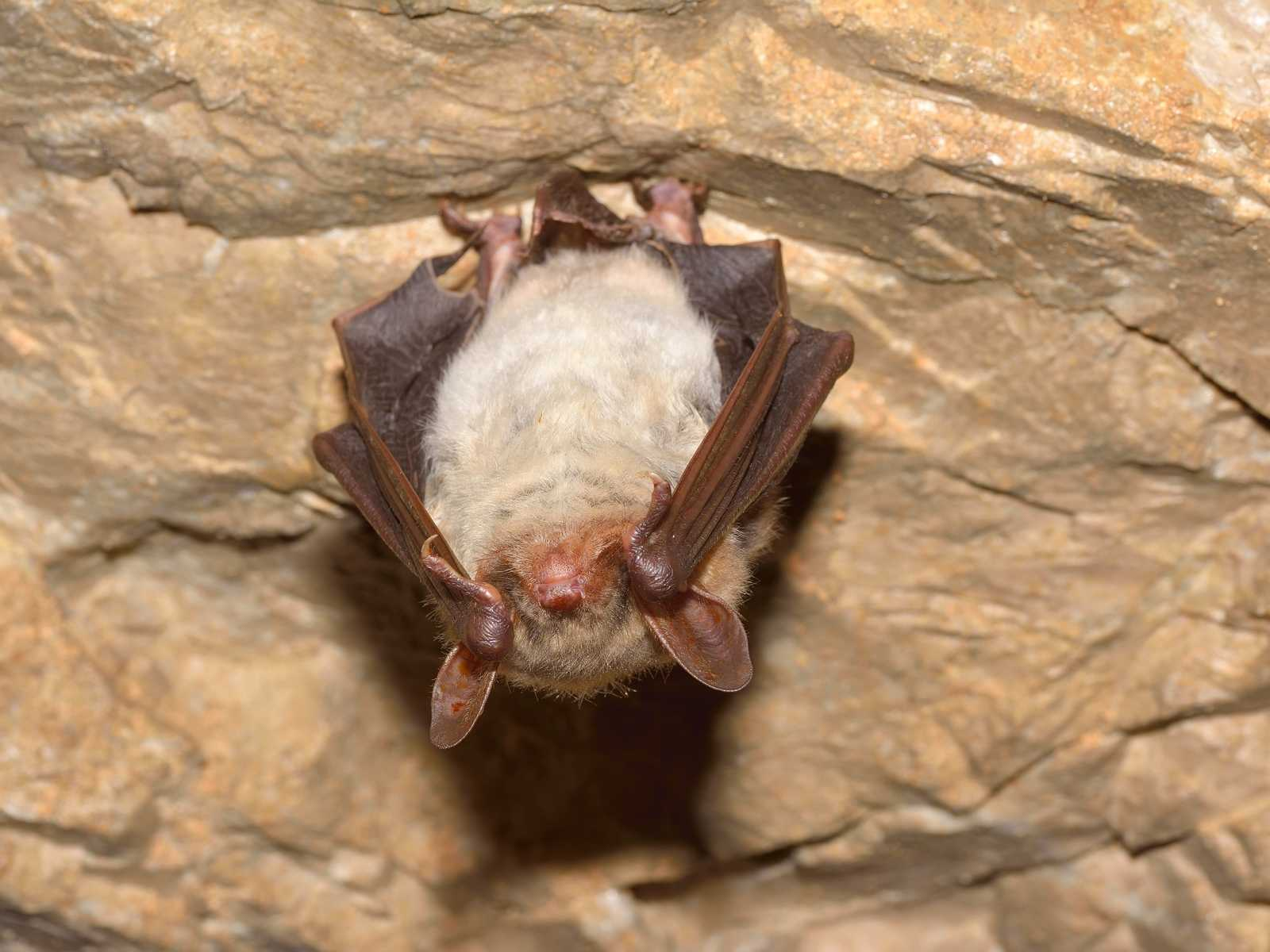 how well can bats see?