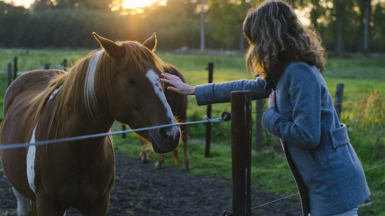 Do Horses Like to Be Petted? [+HOW TO DO IT WELL]