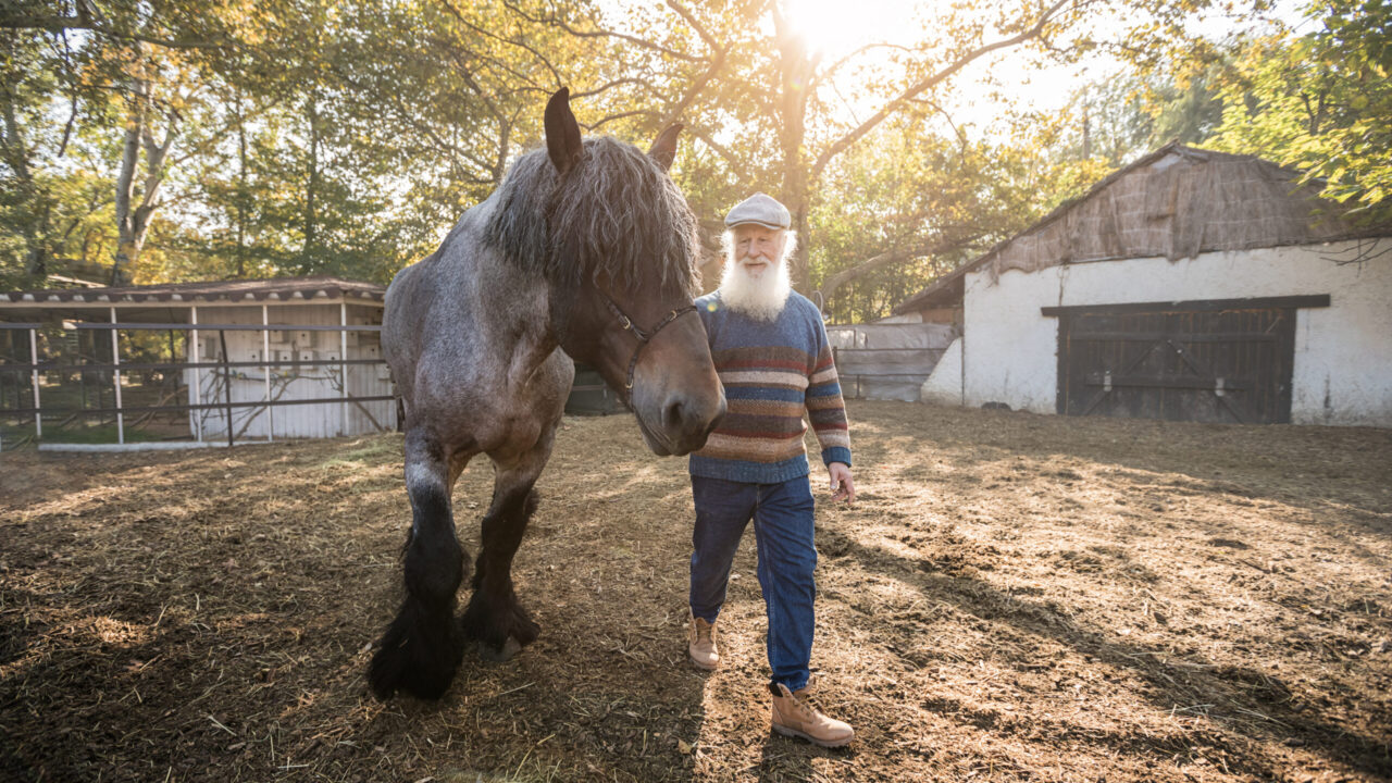 Horse Care 101: The Basics of How to Look After Horses