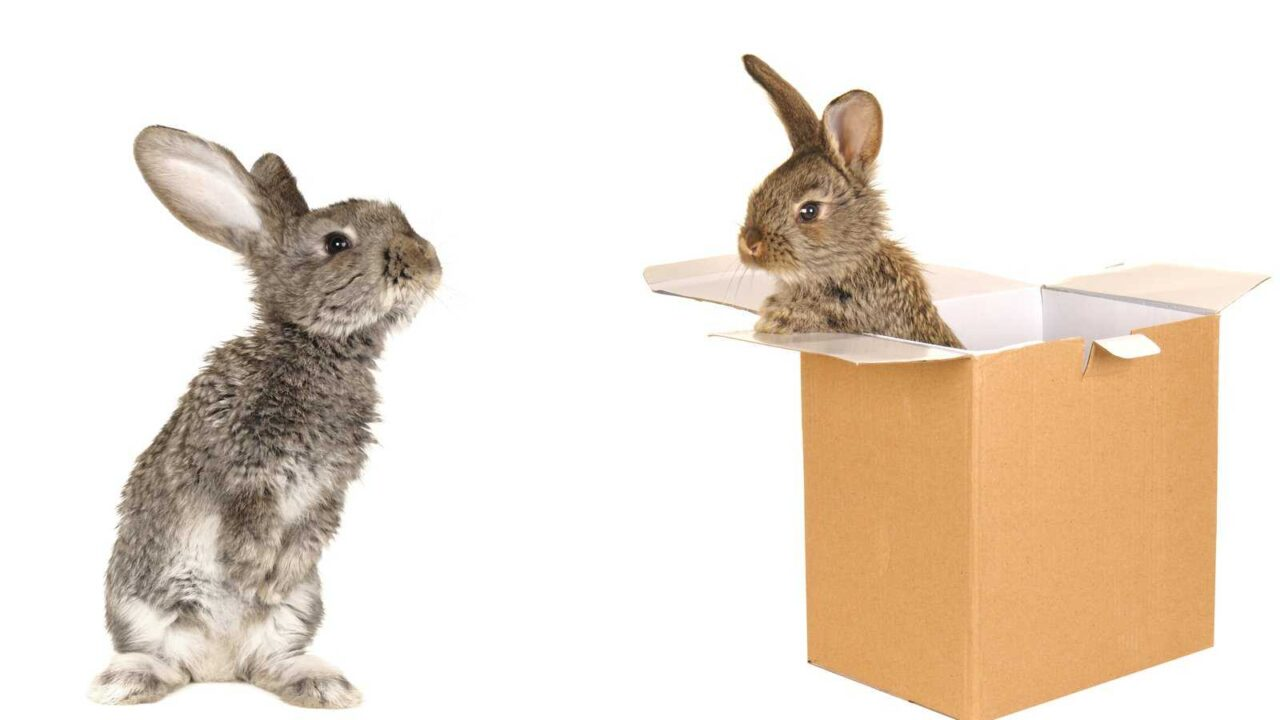 Why Do Rabbits Eat Paper or Cardboard? Is it Bad?