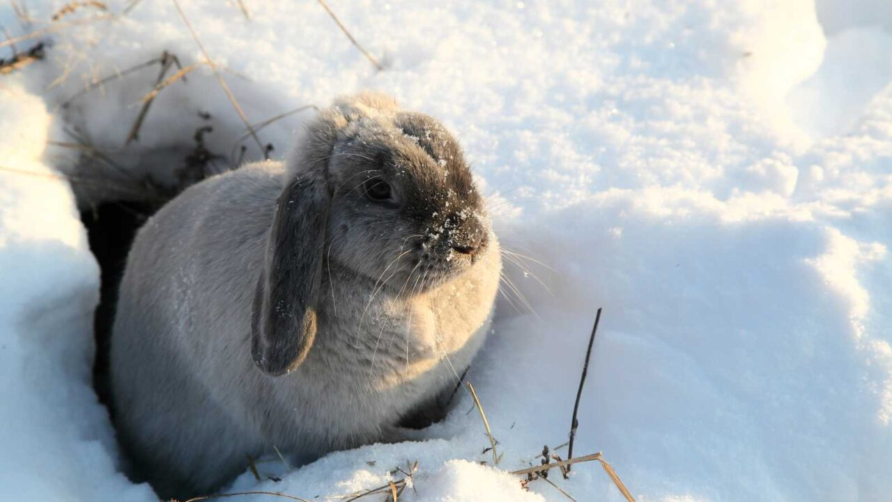 Why Do Rabbits Cover up Their Holes?