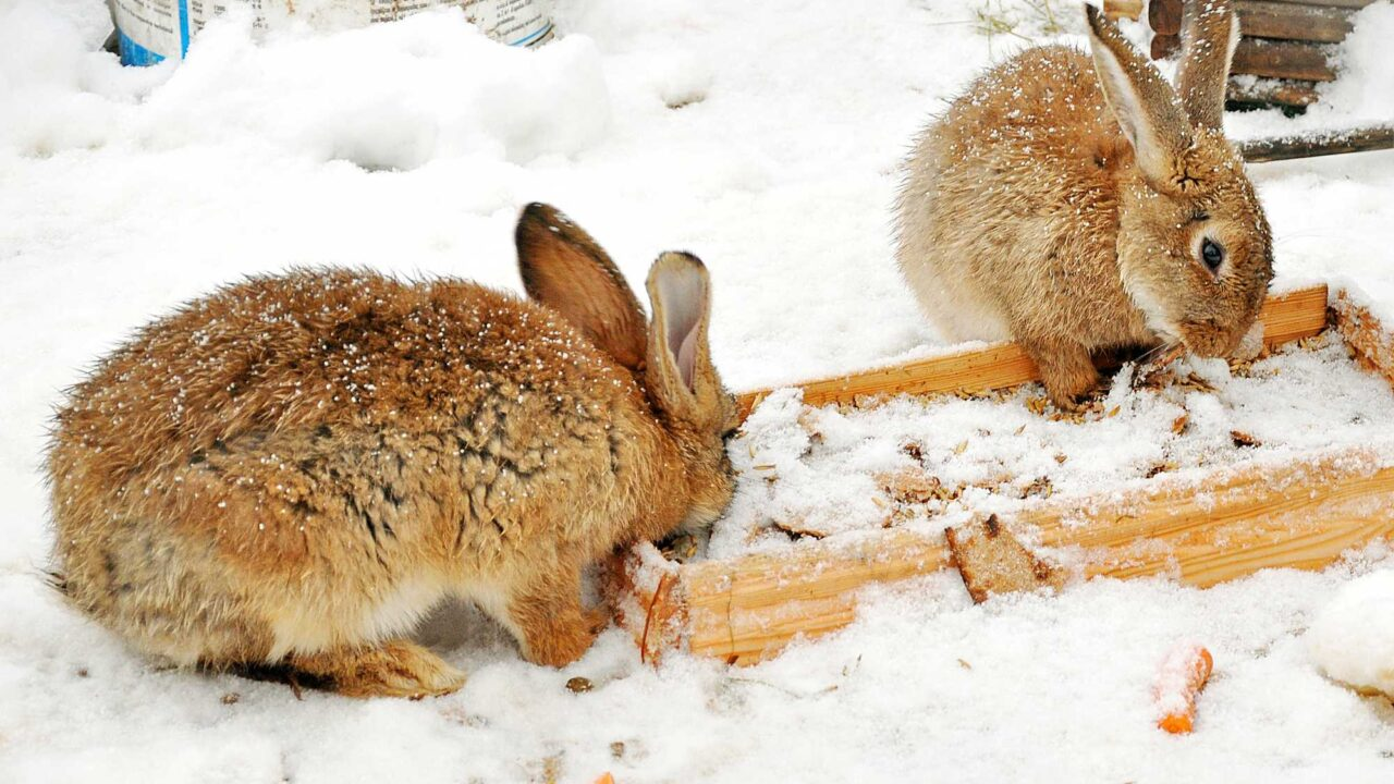 Why Do Rabbits Eat So Much? Should I be Worried?