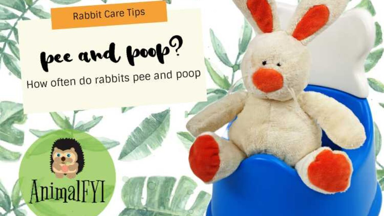 How Often Do Rabbits Pee and Poop? [POOP GUIDE]