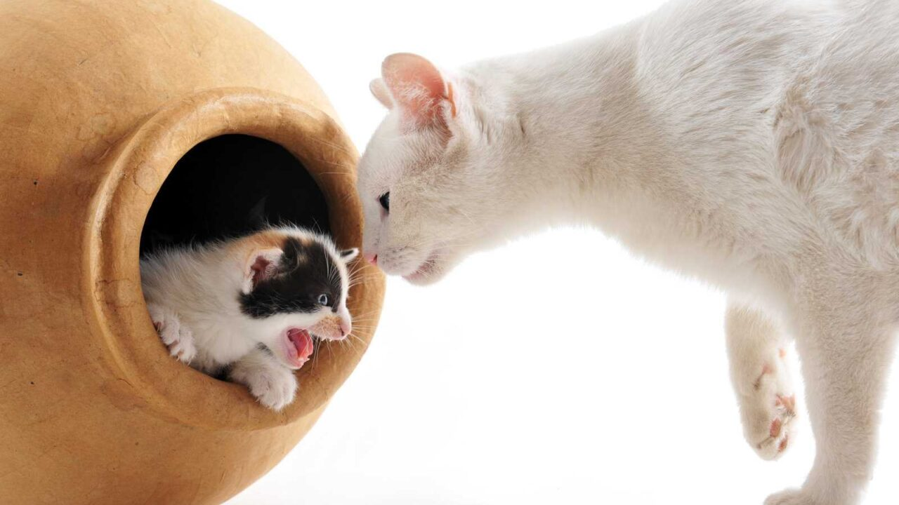 Do Cats Eat Their Babies? 10 Reasons They Might!