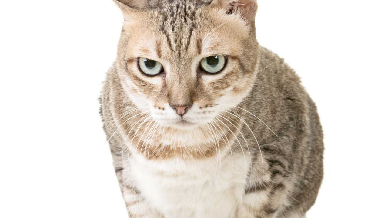 Do Cats Forgive Abuse? Do They Hold Grudges?