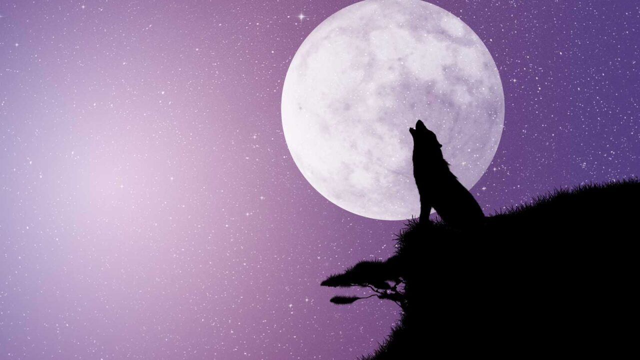 Do Dogs Howl at the Moon? Is it Normal?