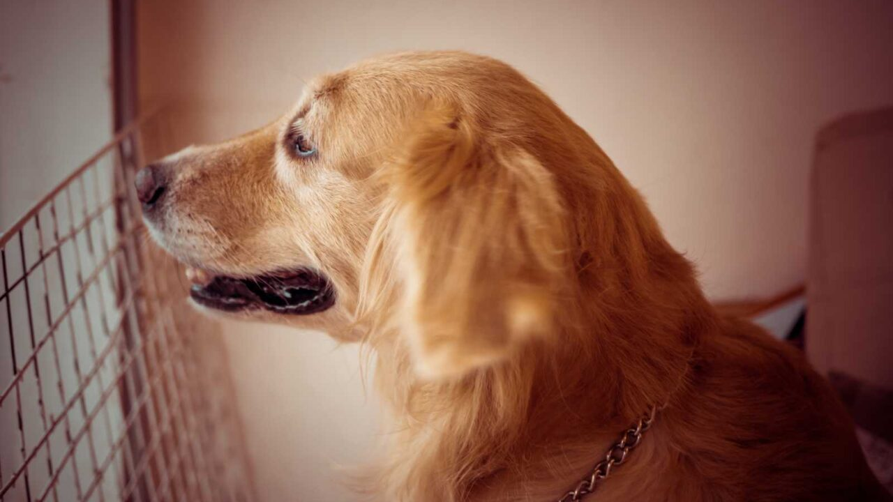 Fido's Features: Do Dog Whiskers Grow Back?