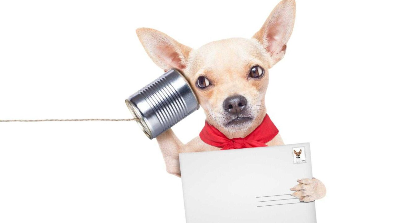 Do Dogs Communicate with Each Other? [DOG COMMUNICATION 101]
