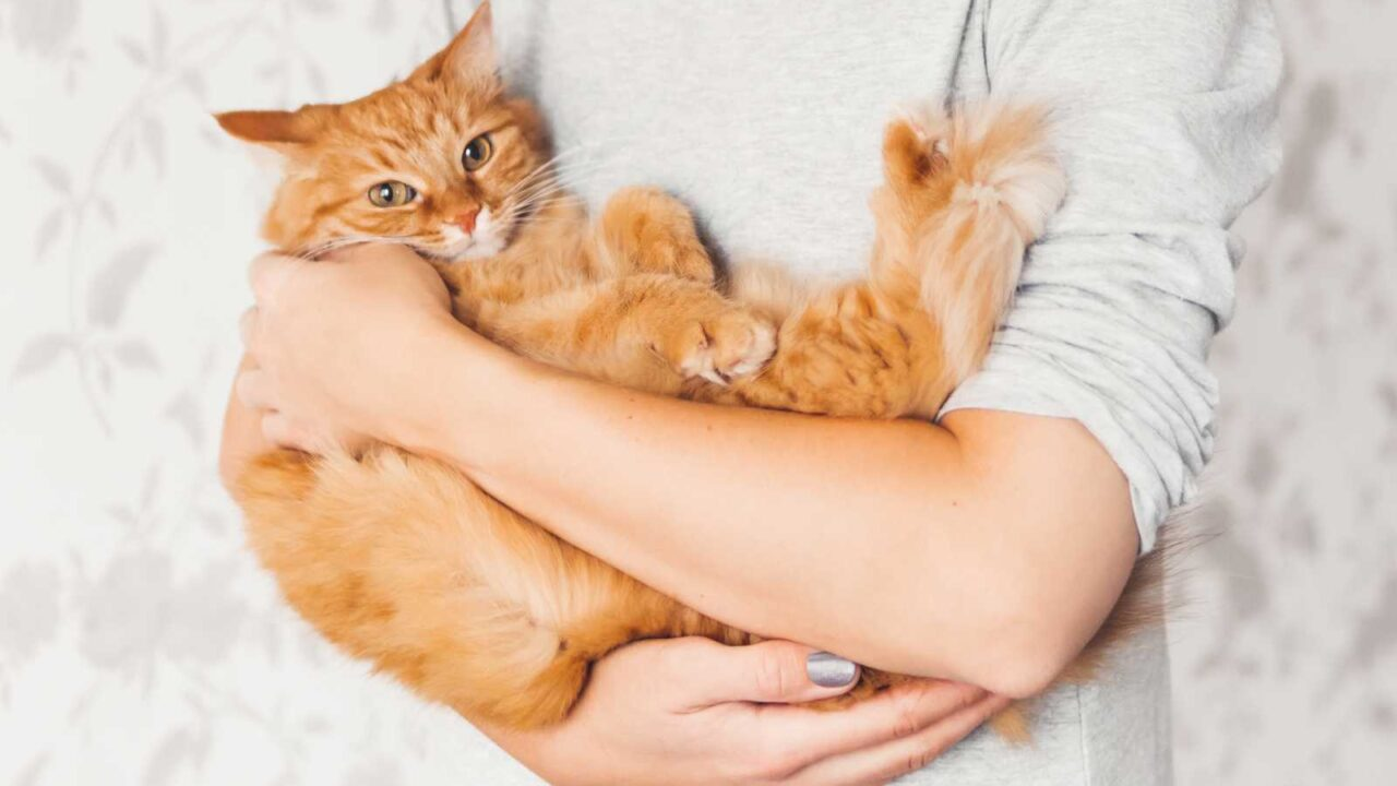 10 Best Pets to Cuddle on those Cold Nights!!