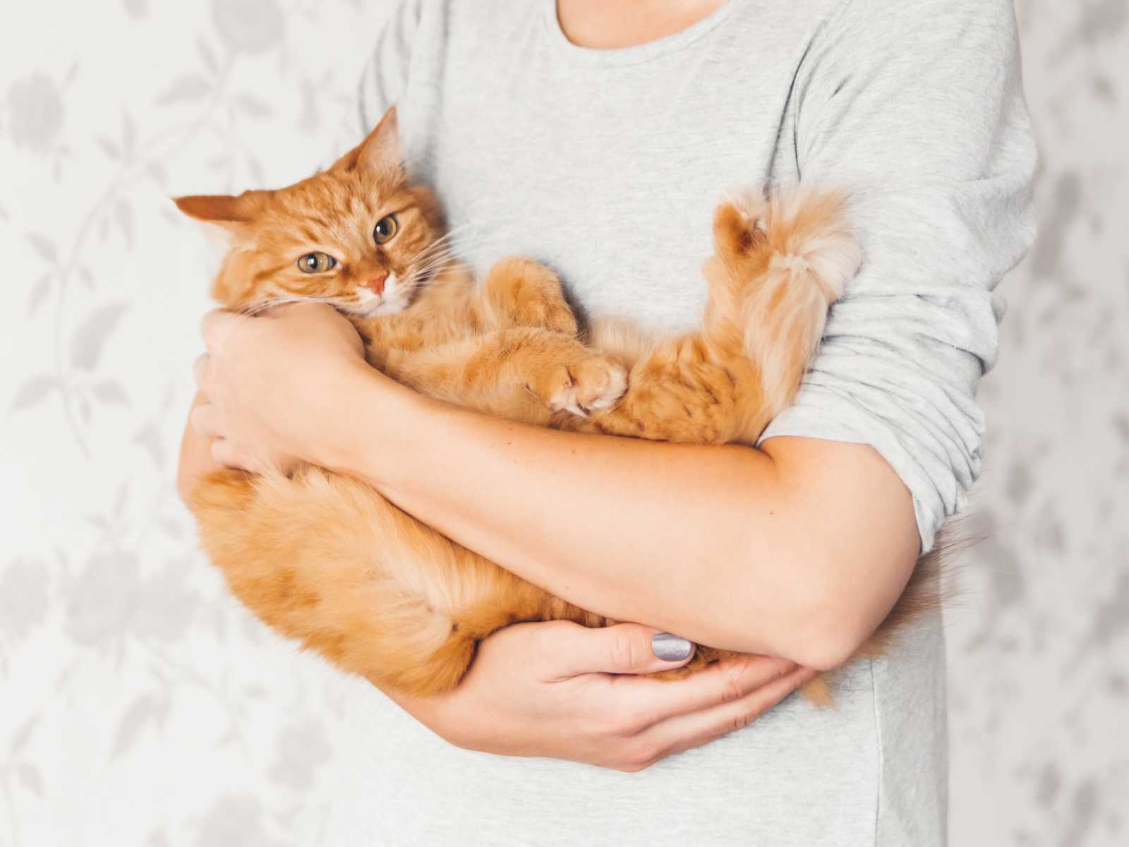 Best pets for cuddling.